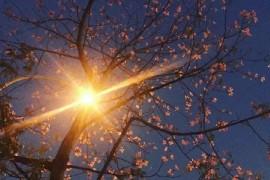 成长就像走夜路一样,既没有灯也没啥人,但正因为黎明很美,所以你要酷酷地走下去